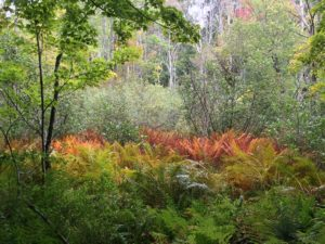 """ferns, backroad in Austerlitz"" Wendy Noyes"