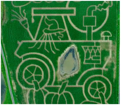 Samascott S Annual Corn Maze Now Open In Kinderhook