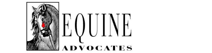 Last Public Open Day at Equine Advocates for 2019, Nov 10