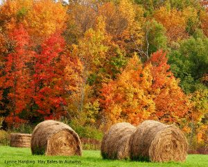 hay-bales-in-autumn-title-300x240