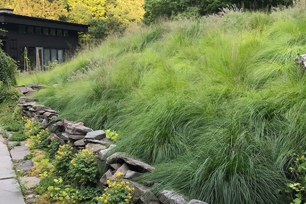 NYCC_Garden of Linda Horn_Prairie dropseed hill_web